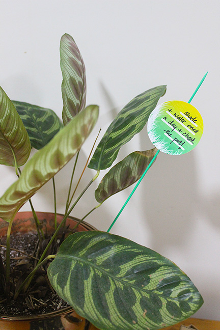 Have trouble remembering plant instructions? An easy way to tackle it, is by making planter sticks using our free printables. Follow the DIY tutorial and never mix up plant care again! - The Craftables